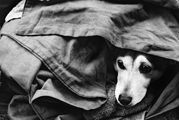 homeless_dog_by_hannah040